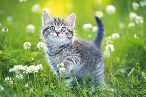 Image Kittens Jigsaw