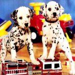 Puppy Pairs Puzzle