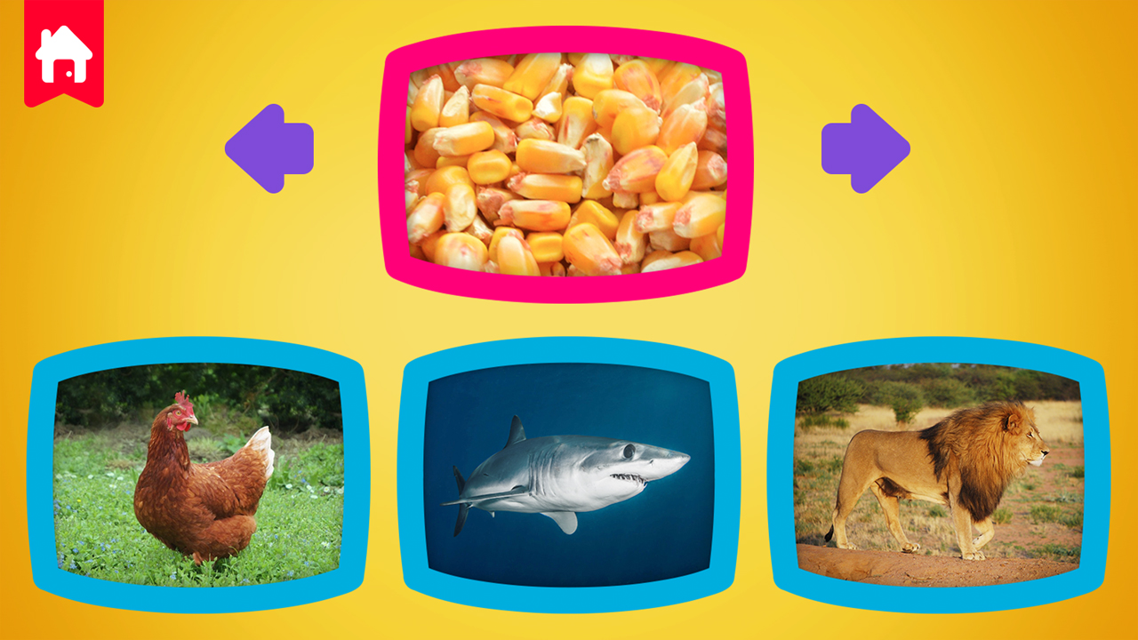 Image What do animals eat