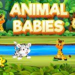 Animal Babies