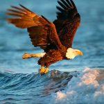 Animals Jigsaw Puzzle – Eagle