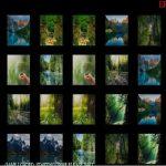 Nature Memory