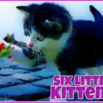 Six Little Kittens